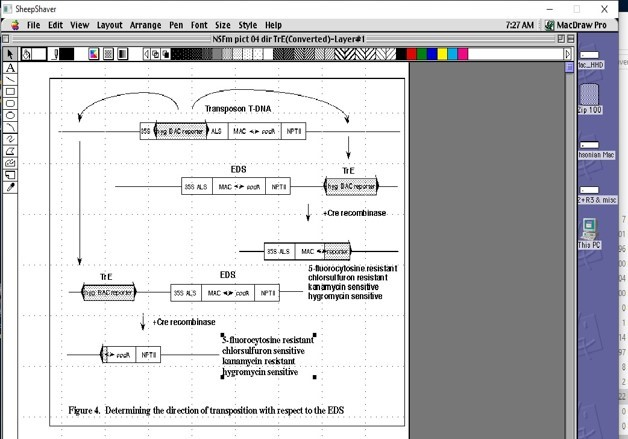 Screen capture showing lots of text and graphics included a complex flow chart documenting DNA.